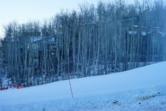 Boom en sneeuw in Colorado Stock Foto's