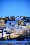 Boom en sneeuw in Colorado Stock Fotografie