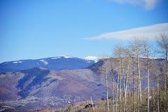 Boom en sneeuw in Colorado Stock Afbeelding