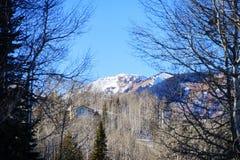 Boom en sneeuw in Colorado Royalty-vrije Stock Afbeeldingen