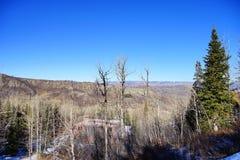 Boom en sneeuw in Colorado Royalty-vrije Stock Afbeelding