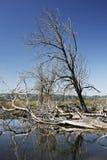 Boom en takken die in moeraslandhabitat wordt ondergedompeld Stock Afbeeldingen