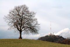 Boom en toren op een heuvel stock foto's