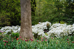 Boom en tuinen in Sherwood Gardens Park in Guilford, Baltimore Stock Fotografie
