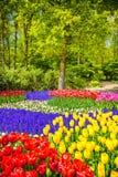 Boom en tulpenbloemen in de lentetuin Keukenhof, Nederland, Royalty-vrije Stock Foto