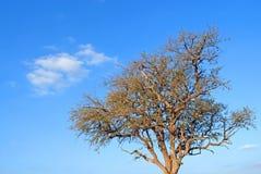 Boom en witte wolken in blauwe hemel Royalty-vrije Stock Foto's