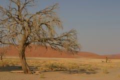 Boom en woestijn Stock Afbeelding
