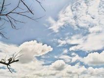 Boom en Wolken Royalty-vrije Stock Afbeeldingen