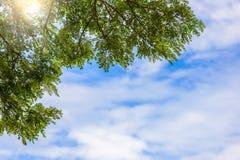 Boom en wolken op blauwe hemel Royalty-vrije Stock Foto's