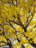 Boom en zijn schoonheids gele fllowers royalty-vrije stock foto
