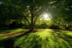 Boom en zonlicht stock fotografie