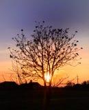 Boom en zonsondergang op de achtergrond Stock Afbeelding