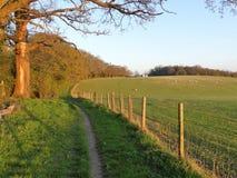 Boom gevoerde weg naast landbouwgrond in de lente, Chorleywood stock foto's