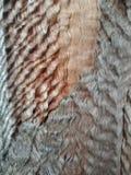 Boom golvende textuur in het bos, geweven behang als achtergrond stock foto