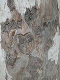 Boom golvende textuur in het bos, geweven behang als achtergrond stock foto's