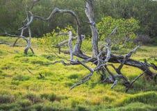 Boom in gras Stock Afbeeldingen