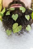 Boom groene bladeren in de herfst royalty-vrije stock fotografie