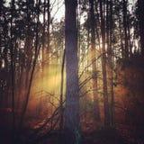 Boom in het bos Royalty-vrije Stock Afbeeldingen