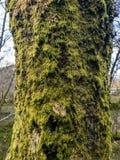 Boom in het bos met muskus en korstmos stock afbeeldingen