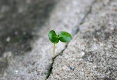 Boom het groeien door concrete barst Royalty-vrije Stock Fotografie