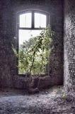 Boom het groeien in Fort DE La Chartreuse royalty-vrije stock afbeeldingen
