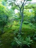 Boom het groeien op een bemoste boshelling Stock Afbeeldingen