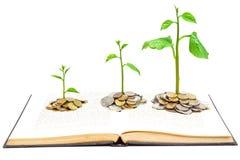 Boom het groeien op een boek Stock Foto