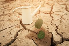 Boom het groeien op gebarsten grond Barst droge die grond in droogte, van globale verwarmende gemaakte klimaatverandering wordt b royalty-vrije stock foto's