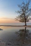 Boom het groeien op het strand die in een pool bij zonsondergang nadenken golde Stock Fotografie