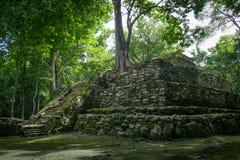 Boom het groeien op oude Maya tempel complex in Muil Chunyaxche Royalty-vrije Stock Afbeelding