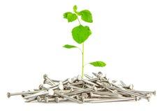 Boom het groeien op spijker, Aard en bouwconcept Stock Afbeeldingen