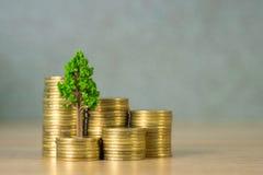 Boom het groeien op stapel van gouden muntstukken, de groei bedrijfsfinanciën binnen royalty-vrije stock foto's