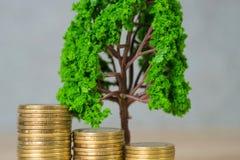 Boom het groeien op stapel van gouden muntstukken, de groei bedrijfsfinanciën binnen royalty-vrije stock afbeeldingen