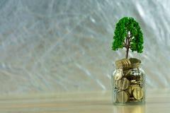 Boom het groeien op stapel van gouden muntstukken, de groei bedrijfsfinanciën binnen stock afbeeldingen
