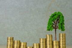 Boom het groeien op stapel van gouden muntstukken, de groei bedrijfsfinanciën binnen royalty-vrije stock foto