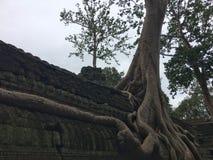 Boom het Groeien over de tempel van Ta Prom royalty-vrije stock afbeelding