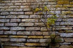 Boom het groeien van een muur Royalty-vrije Stock Foto's