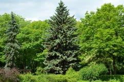 Boom in het groene park Royalty-vrije Stock Foto's