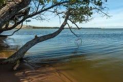 Boom het hangen over het groene water Stock Foto's