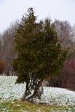 Boom in het park na de eerste sneeuw Royalty-vrije Stock Foto's