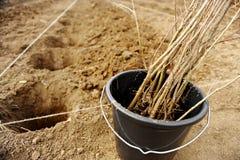 Boom het planten Royalty-vrije Stock Foto's
