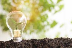 boom het planten en de groei omhoog op geldmuntstukken, die op gloeilamp met grond worden gestapeld stock foto