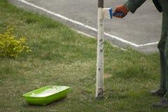 Boom het schilderen bescherming met kalk Het Tuinieren van de lente royalty-vrije stock foto's