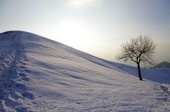 Boom in het sneeuwlandschap van de Winter Royalty-vrije Stock Fotografie