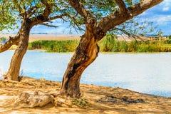 Boom in Iraaks platteland dichtbij de rivier van Tigris stock foto's