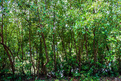 Boom kleine bosachtergrond Royalty-vrije Stock Foto