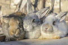 Boom kleine konijnen Stock Fotografie
