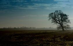 Boom in landschap royalty-vrije stock afbeeldingen