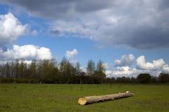 Boom in landschap royalty-vrije stock foto's