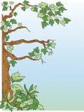 Boom met bladeren vector illustratie